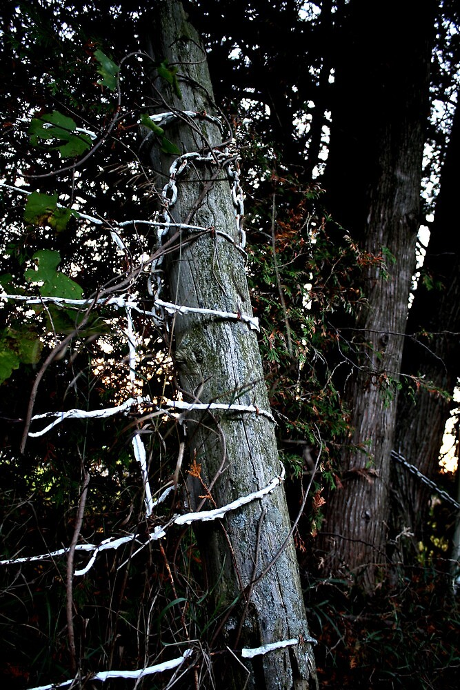 Wire and Wood by AndreaCT