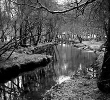 River Pathway by Nuno Pires