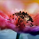 Splash of color  by Nicole  Markmann Nelson