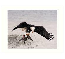 Bald Eagle Captures Duck Art Print