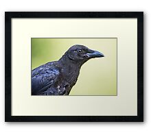 In Praise of the Crow Framed Print