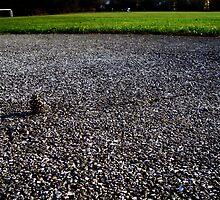 Lone Pinecone by takemeawaycn