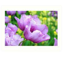 May tulips Art Print