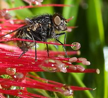The Fly # 2 by GailD