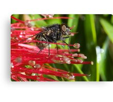 The Fly # 2 Canvas Print