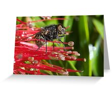 The Fly # 2 Greeting Card