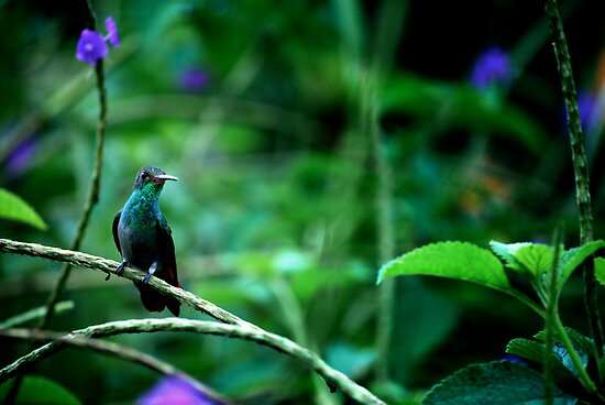 Hummingbird on a branch by moreguinness