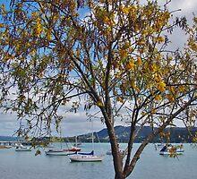 Kōwhai tree at Whangaroa by lezvee