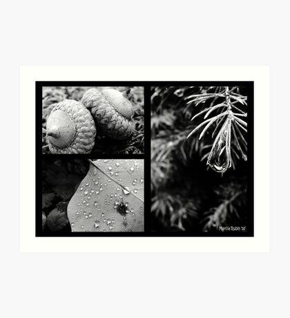 Collage - Nature up Close  Art Print