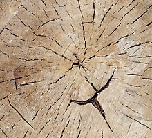 Top view close up on an old tree stump by vladromensky