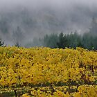 Fall Vineyard by John Behrends