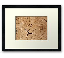 Top view closeup on an old tree stump Framed Print