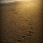 sandpiper footprints by piwaki