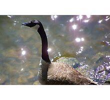 Waterfowl Photographic Print