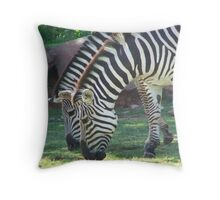 Zebra's  Throw Pillow
