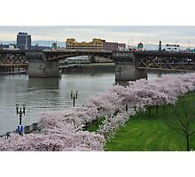 Cherry Trees Along the Willamette Waterfront Photographic Print