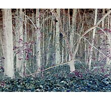 Inverted Late Fall Woodlands Photographic Print