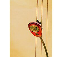 Pigeon in lamppost Photographic Print