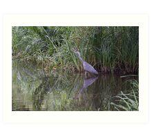 Grey Heron in relflection Art Print