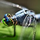 Summer Dragonfly by Dennis Stewart