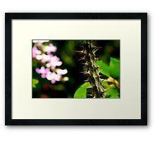beauty and the beast :-/    Framed Print