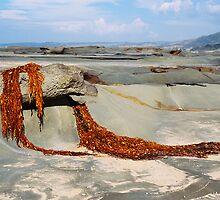 Seaweed Drape - Great Ocean Road by Sophia Phoenix