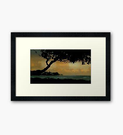 Tree Cover... Kauai Sensual Series Framed Print