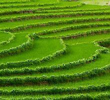 Green On Green by SharonYanai