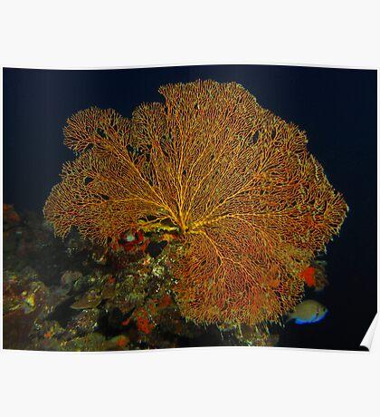 Hideaway Fan Coral Poster