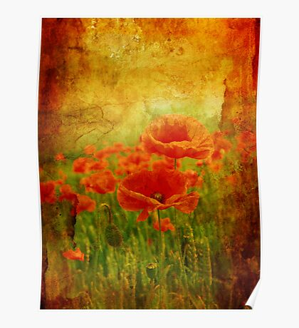 Red poppies dream Poster