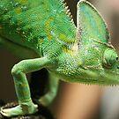 Chameleon by Joanne Emery