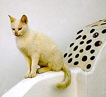 White Cat, Black Spots by Christina Backus
