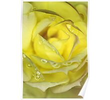 Rose in Yellow Poster