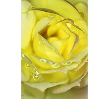 Rose in Yellow Photographic Print