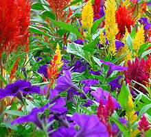 Color Medley - Colonial Park Gardens, NJ by Timothy Accardo