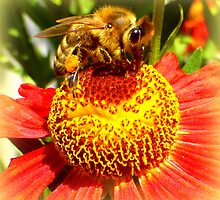 Bee at work by ©The Creative  Minds