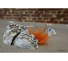 OYSTER & NET Photographic Print