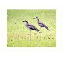 Stand Tall - curlews Art Print