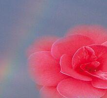 Simplicity by Plum