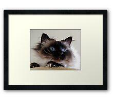 Do I look like Salvador Dali? Framed Print