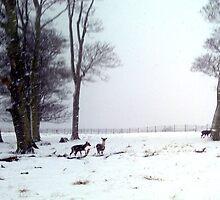 """Oh DEER"" its snowing again! by Merice Ewart Marshall - LFA"