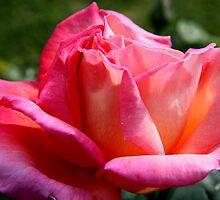 Blush by Camilla