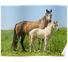 Connemara pony mare with foal Poster