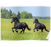 Friesian horses Poster