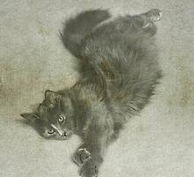 Stretching Cat by SuddenJim