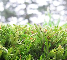 Wild MOSS by thejessis