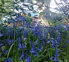 Bluebells woodland walk - Sewerby Hall  by Merice Ewart Marshall - LFA