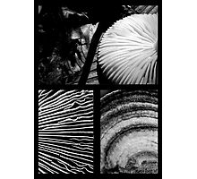 Collage - Black & White Shrooms Photographic Print