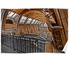 Natural history museum London Poster