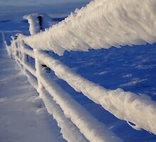 Iced fence by themajesticfool